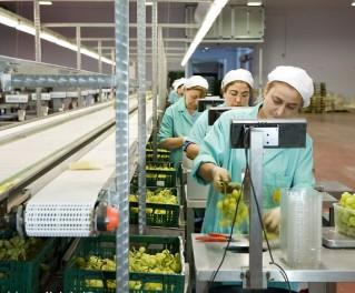 食品加工ERP系统