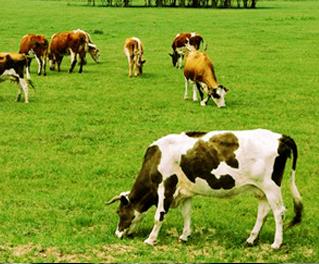 畜牧养殖ERP管理软件