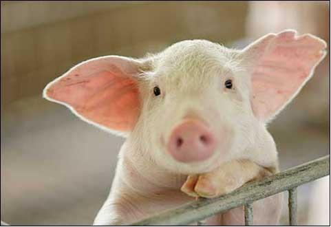 畜牧养殖管理软件