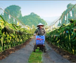 佳年农业,SAP种植成功案例